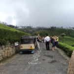 Tea field trekking